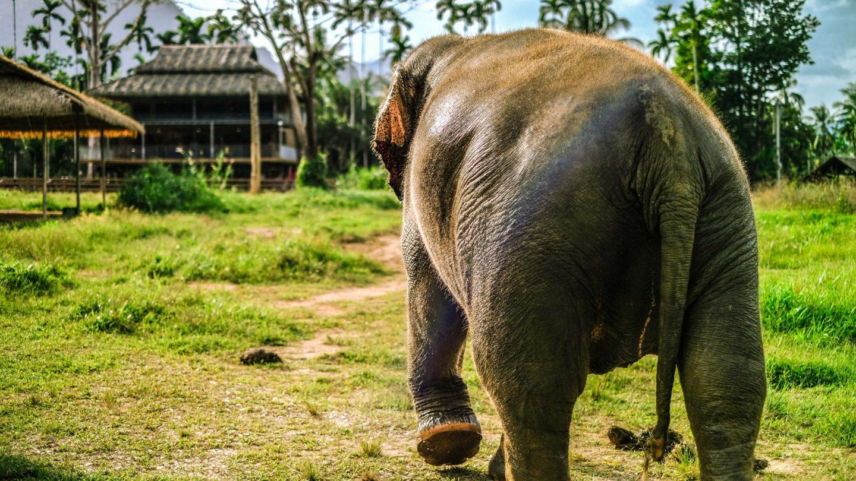 Review Hotel Elephant Hills, Khlong Sok