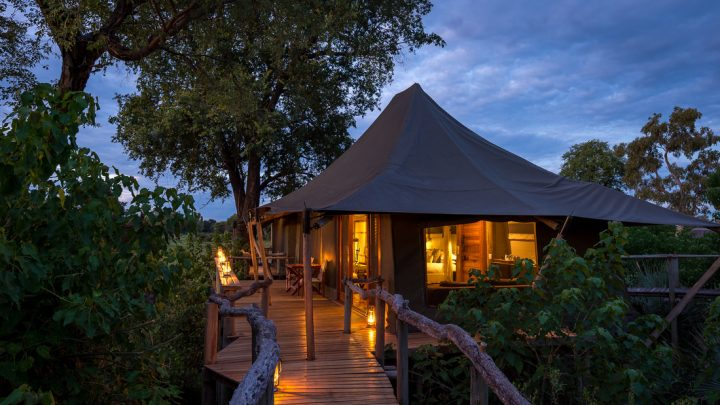 Review Hotel Mombo Camp and Little Mombo Camp